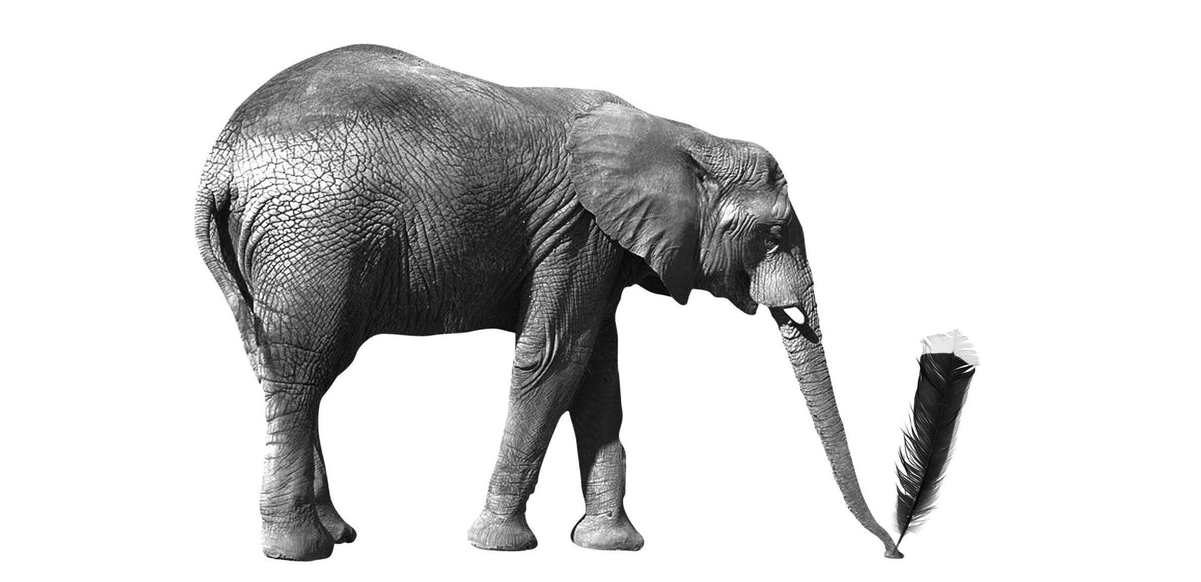 Plume d'Éléphant